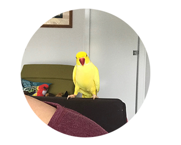 Michelle Sharpe Writing Companion Bird